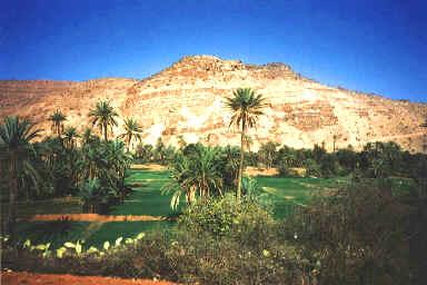Oasis à proximité de l'oued Massa
