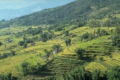 Rizières et villages