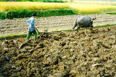 child labour in nepal essay Save the children helps nepalese children living in poverty sponsor a child in nepal to provide them with the healthcare and nutrition they need.