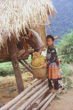 Grenier à riz