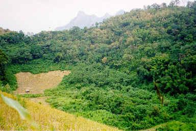 Riz pluvial en montagne