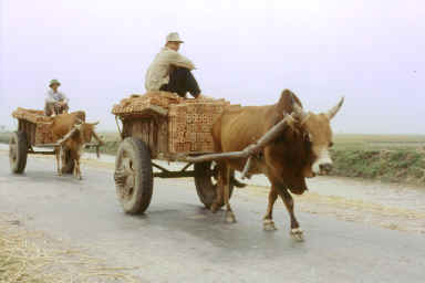 Le chariot à boeuf reste un mode typique de transport