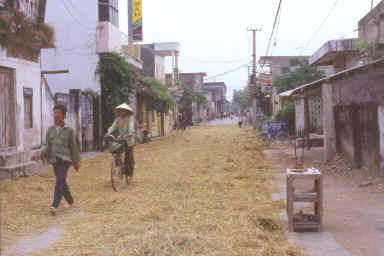 Séchage de la paille de riz