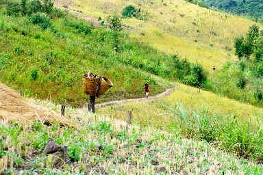 Randonnée à travers les champs de riz